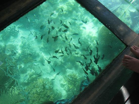 Glass Bottom Boat Boracay day tours