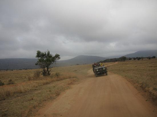 Ravineside Lodge : During our game drive