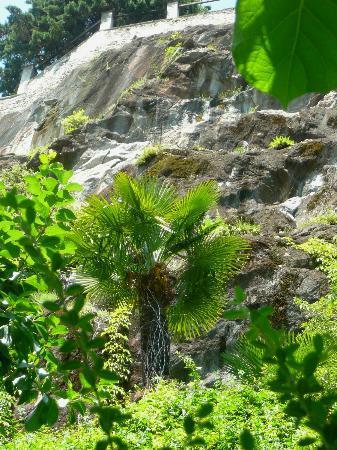 La Villa: Vue sur l'environnement à l'arrière du jardin