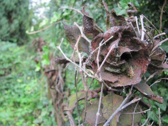 Jewish Cemetery Klatovy: rusted iron rose