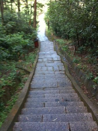 Qifeng Park: Stairs - lots of these!