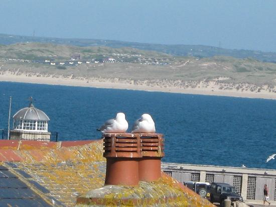 The Anchorage B&B St Ives: The view from the top floor window, gulls extra
