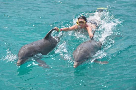 Santa Barbara Beach & Golf Resort, Curacao : Dolphins Academy