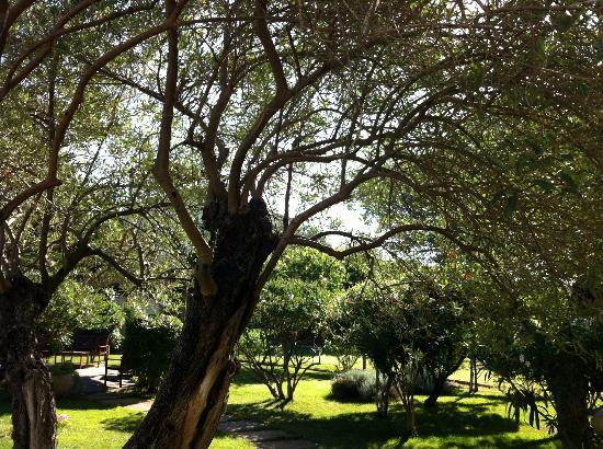 Vessus Country Hotel : Zwischen Olivenbäumen