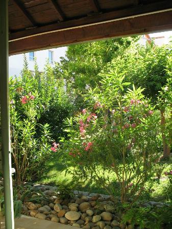 Hotel Saint Roch : garden
