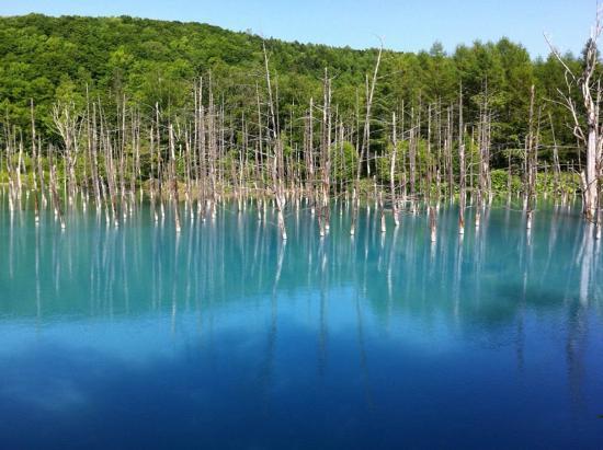 Biei-cho, Japan: 青い池