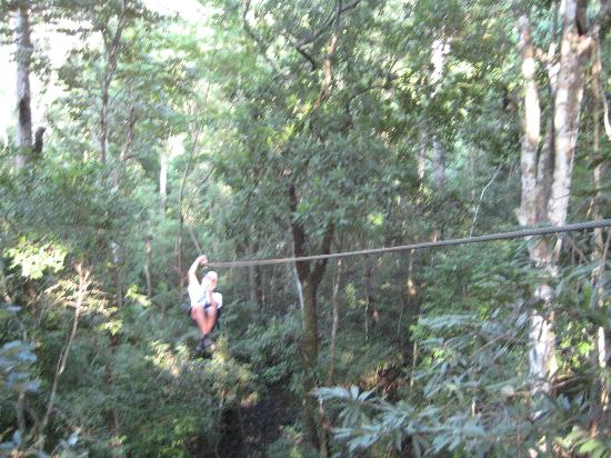 Mariposa Vacation Homes : Canopy Tour