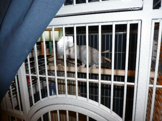 Bedford Hotel: Tinker the Parrot