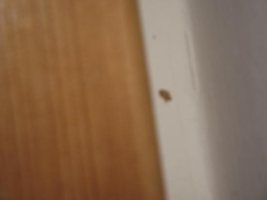 Hotel Olympia: Bug by the bed, was very small so couldn't get camera to focus properly