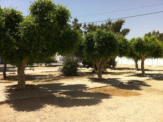 Safran照片