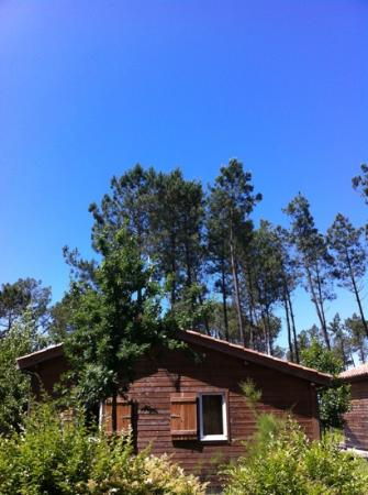 Les Cottages du Lac : Beautiful blue sky & bird song as we had breakfast last week at www.lescottagesdulac.fr. We ret