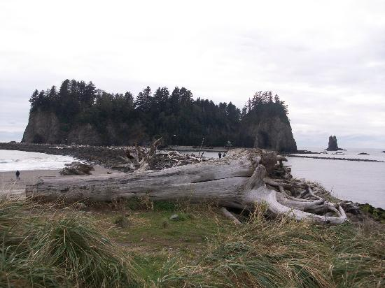Twilight Tours in Forks: First Beach