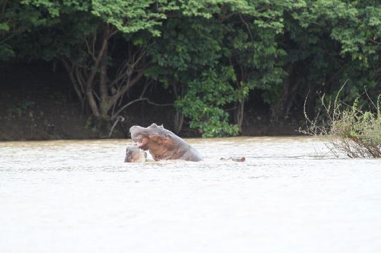 Wechiau Community Hippo Sanctuary : The most we got to see of the hippos
