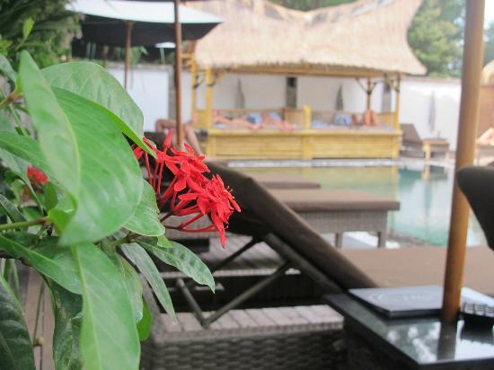 Scallywags Resort: sunbeds