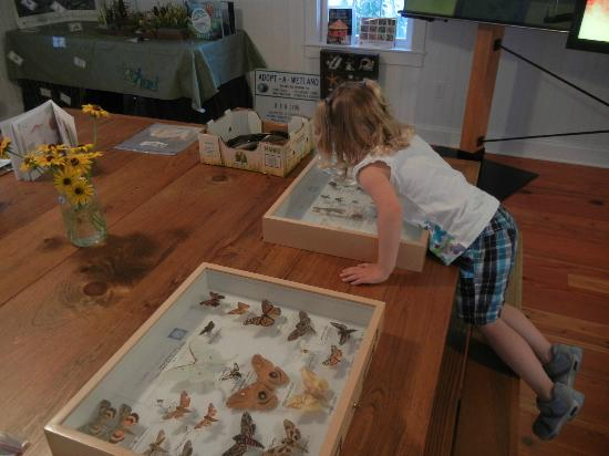 Bethany Beach Nature Center: Examining the insects