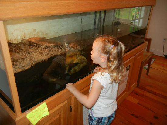 Bethany Beach Nature Center: Making friends with the turtles
