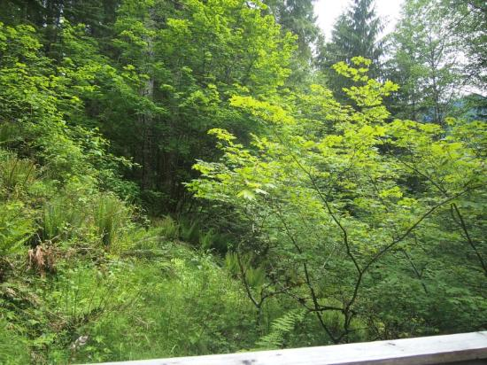 Deep Forest Cabins at Mt. Rainier: Maple Wild: view from deck (very private!)