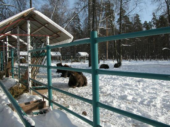 European Bison Nursery