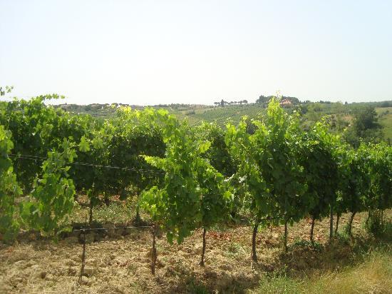 Agriturismo La Colombaia: vinyards
