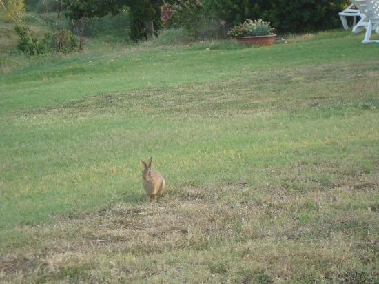 Agriturismo La Colombaia: Cute Bunnies come out at night