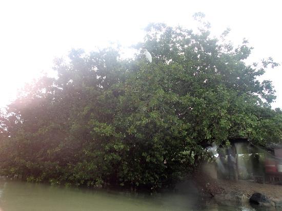 Sea Thru Kayaks VI: Egret