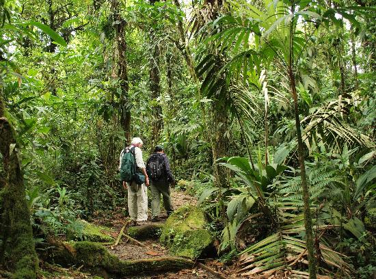 Parque Nacional Braulio Carrillo : On trail in Quebrada-Gonzalez sector