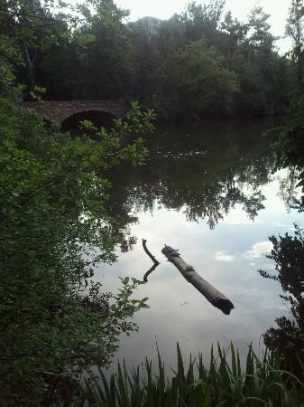 Colorado Shakespeare Festival : Walking to the outdoor theater on the CU campus. There are turtles on the log.