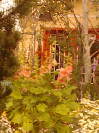 The Courtyard Country Inn: Garden