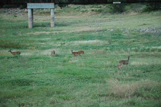 Quartz Mountain Resort Arts & Conference Center: where the deer and the antelope play
