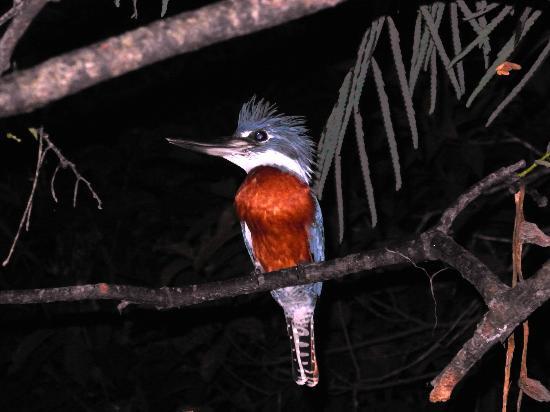 Muyuna Amazon Lodge: Beautiful birds