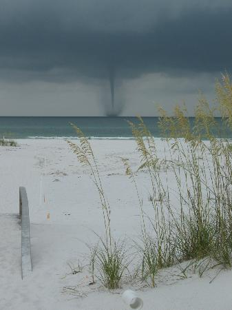 Shell Island : This is my favorite picture with the sea oats.