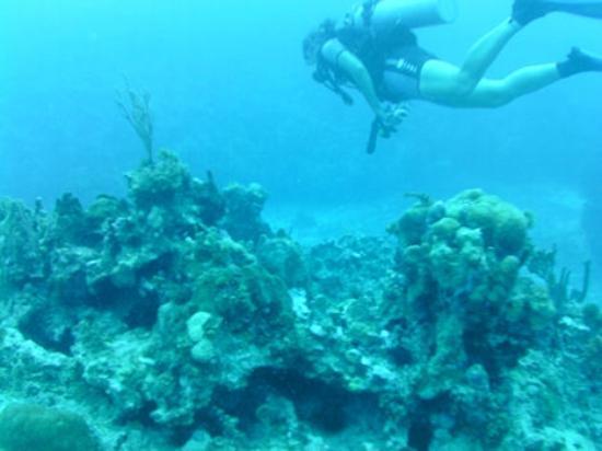 Dream Team Divers: Sabine leads the dive through the reefs