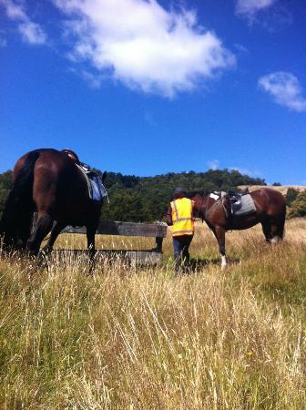 Poronui: horse trekking