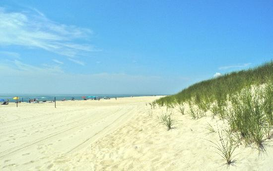Southampton, estado de Nueva York: Dune Grass at cooper beach