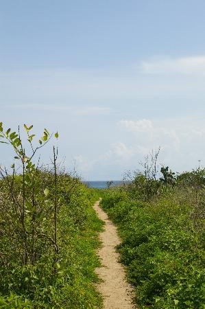 Nosara Beach House : Trail to the beach