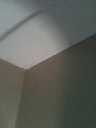Red Lion Inn & Suites Hershey : spider webs in corner