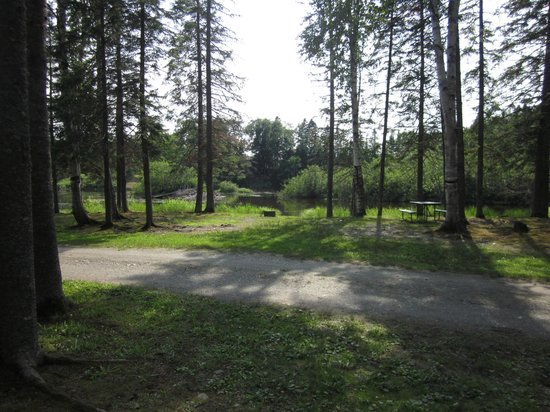 Moose River Campground : Campsite