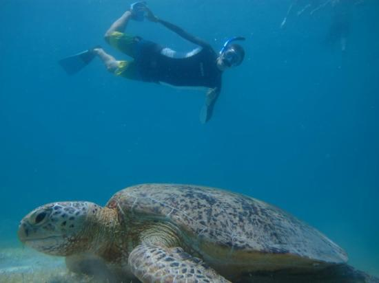 Maya Guesthouse : Me with the turtle