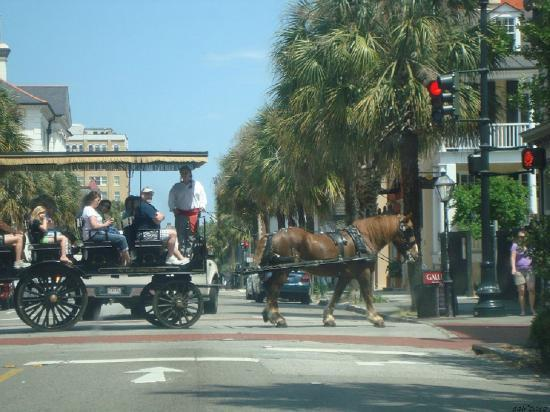 Charleston's Finest Historic Tours: Downtown horse and cart tour