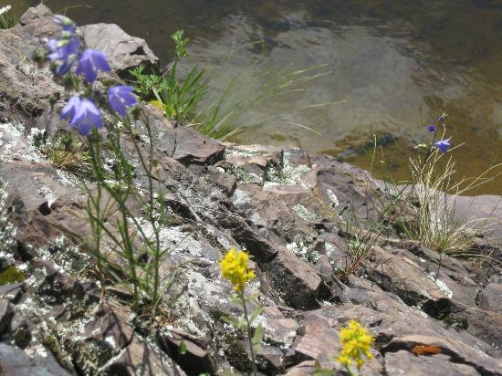 Little Marais Lakeside Cabins: Flowers growing in the rocks in front of Blue String cabin