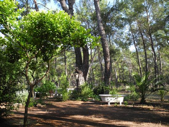 Daphne House: garden