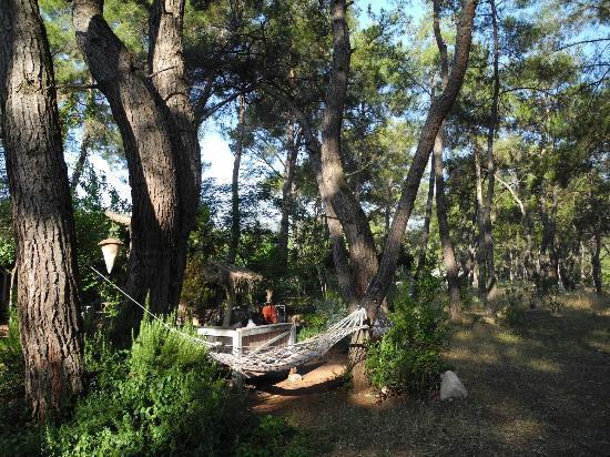 Daphne House: hammocks