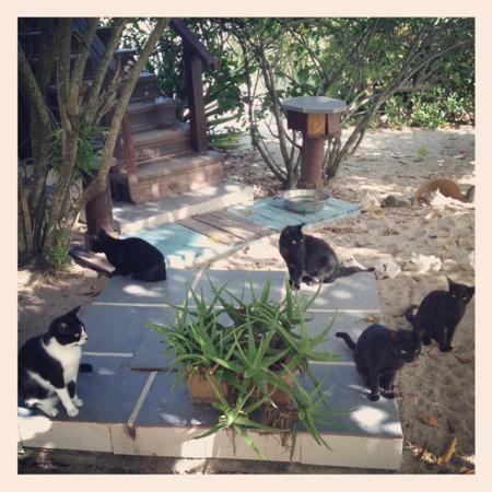Colibri House: cats