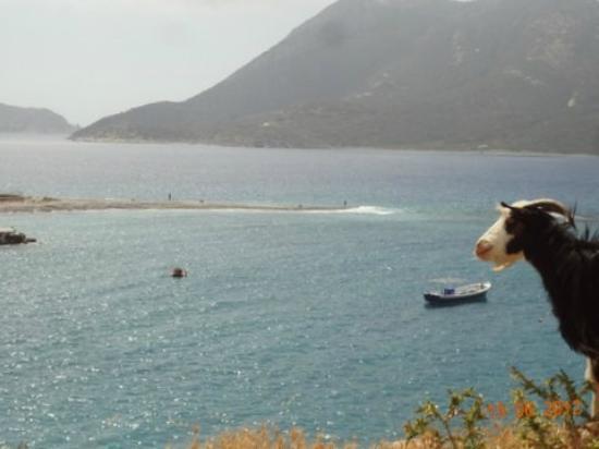 Agios Pavlos Studios: the Agios Pavlos goat
