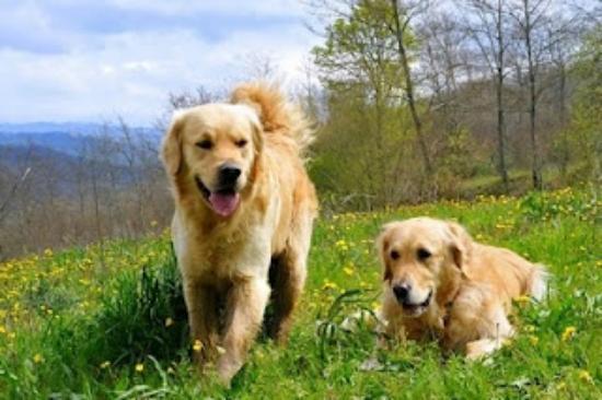 Agriturismo Il Cucciolo: Dogwelcome a Il Cucciolo