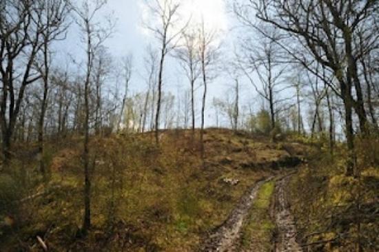 Agriturismo Il Cucciolo: Il bosco vicino all'Agri