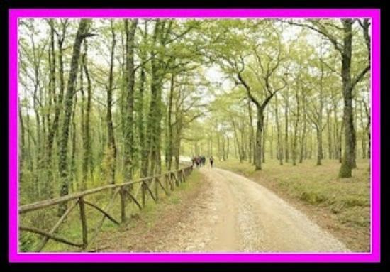 Agriturismo Borgo Spante: Il bosco vicino
