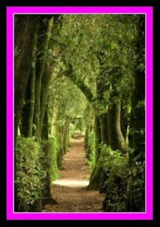 Agriturismo Borgo Spante: Vegetazione dentro il casale