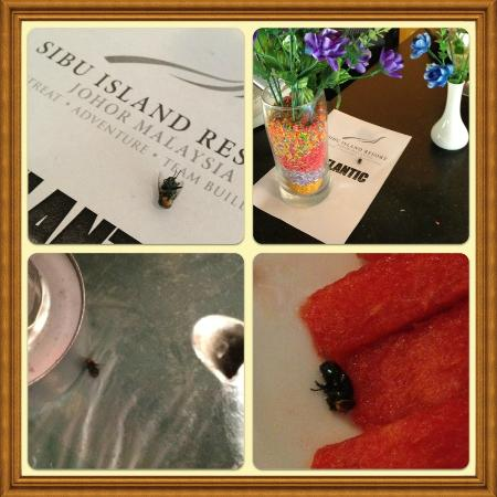 Sibu Island Resort: Dead Fly anywhere in Lumba-Lumba Restaurant and Live Fly found in Fruits