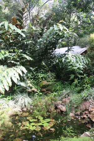 Crater Lakes Rainforest Cottages: a view of our cabin from the little stream and pool